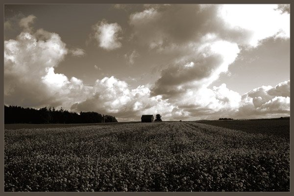 Rapsfeld unter prächtigem Wolkenhimmel