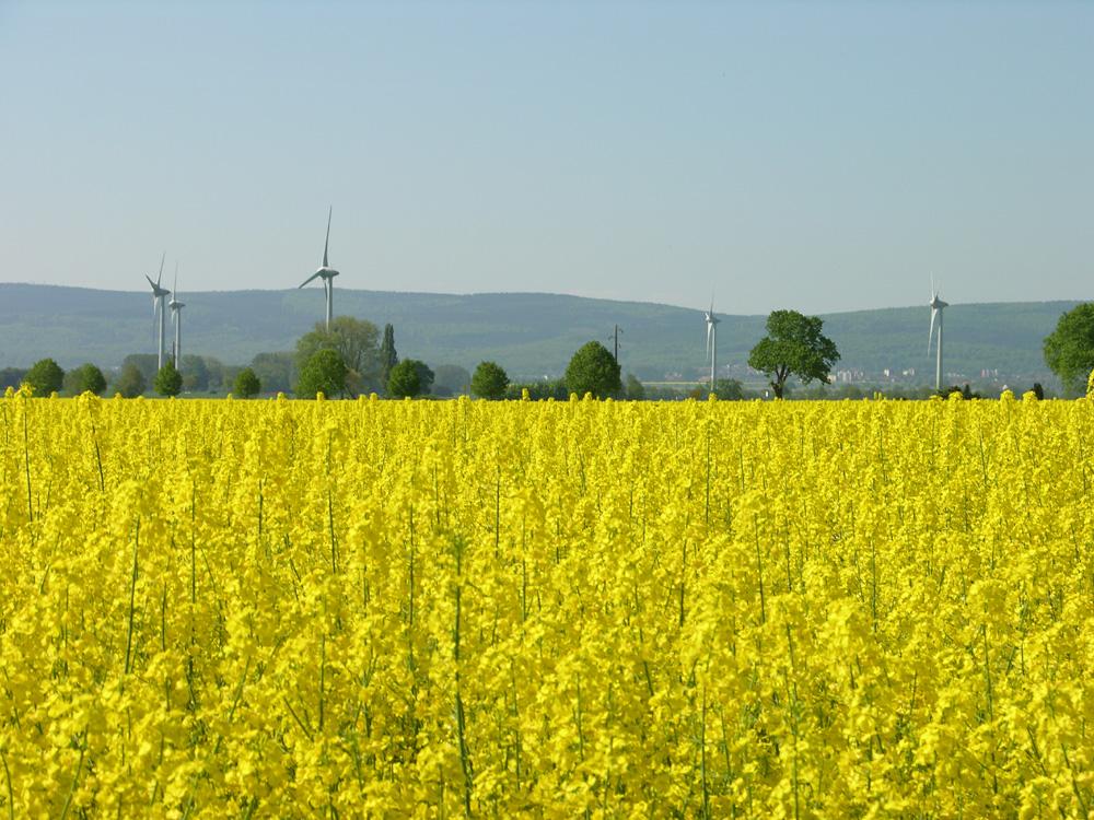 Rapsfeld, Windkraft u. Barsinghausen a. Deister