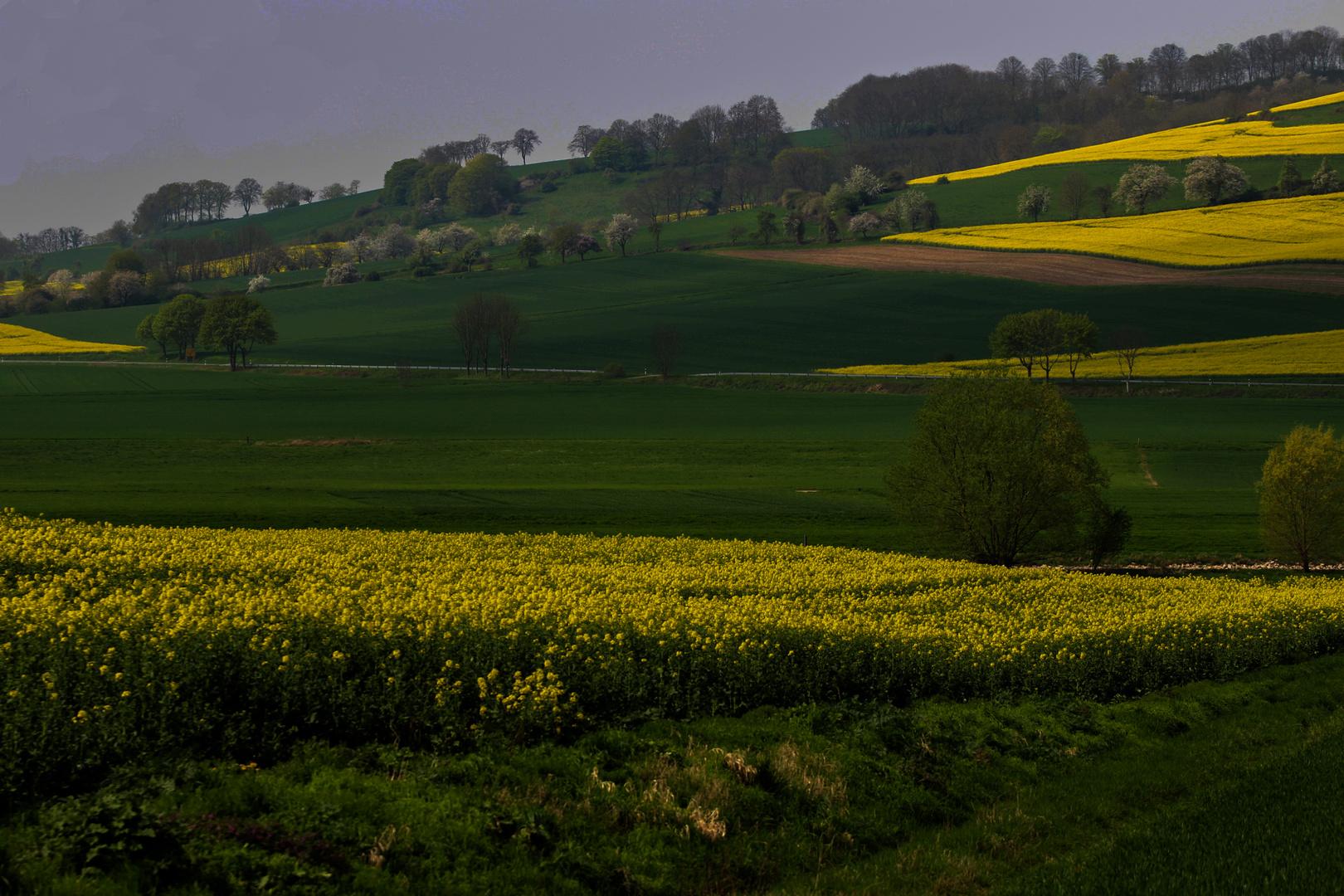 Rapsfelder im Weserbergland
