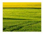 ...rapsgelbe, gersten- und weizengrüne Feldstrukturen...