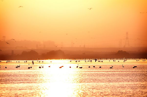Ras Al Khor Bird Samctuary
