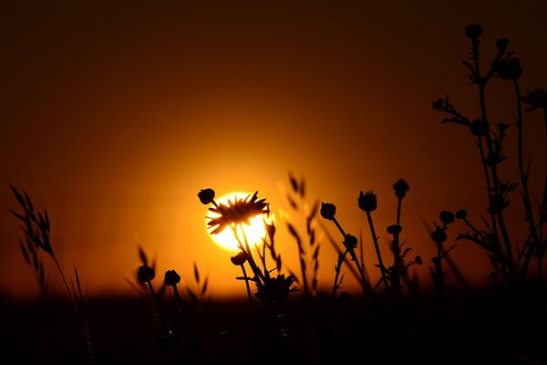 Ras du sol