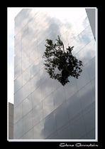 Rascacielo con árbol