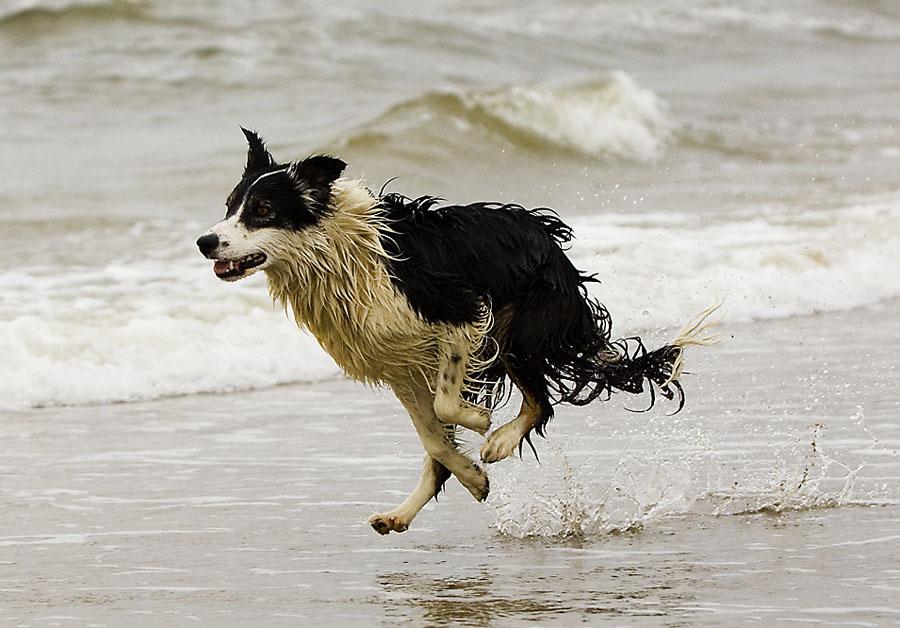 Rasender See-Hund