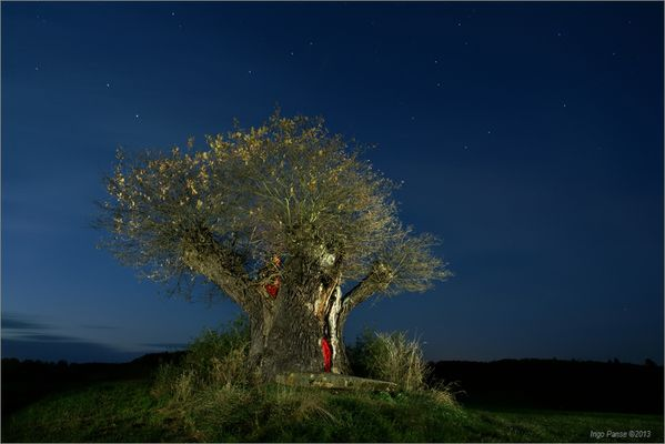 - Rasierpinselbaum -