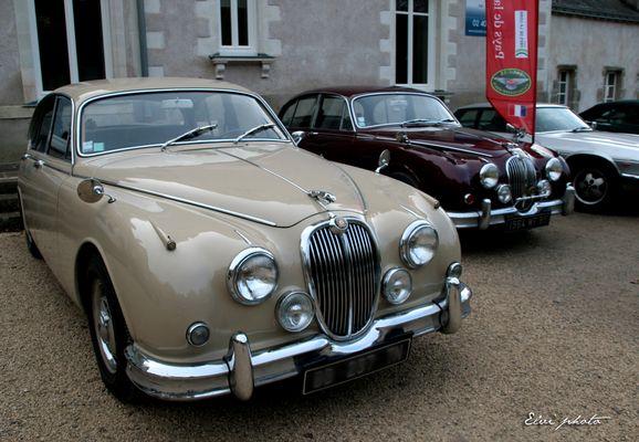 Rassemblement Jaguar