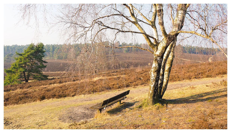Rast auf dem Brunsberg