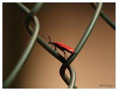 Rast auf den Zaun