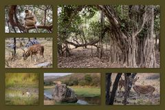 Rathambore Nationalpark 1