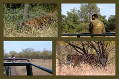 Rathambore Nationalpark 2