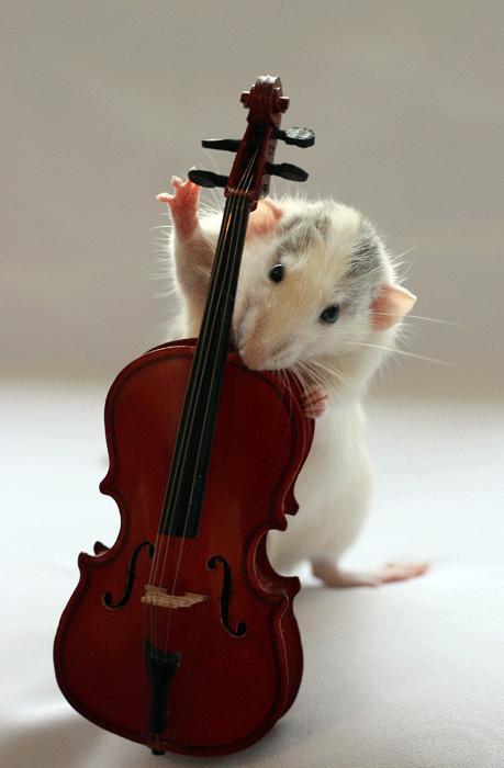 Rats - ERWIN -