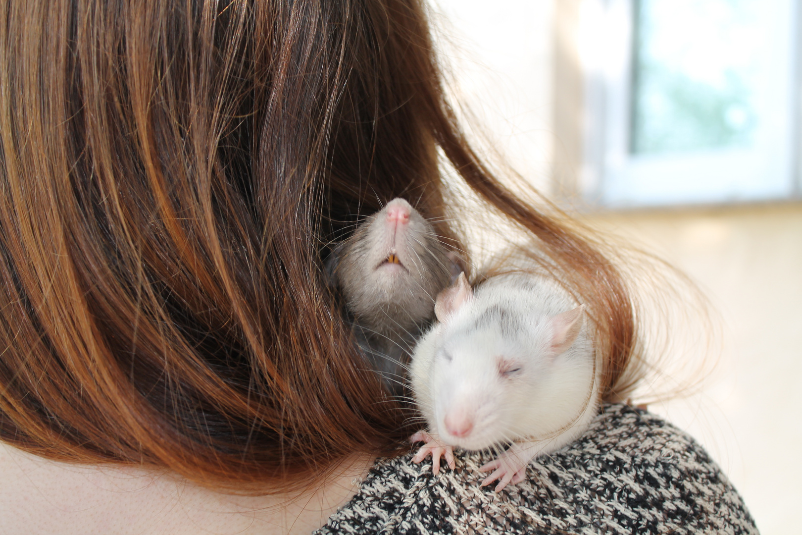 rats in hair