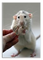 Rats - Mother Love 2 -