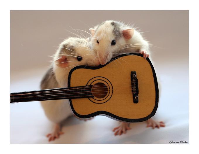 Rats - OLGA und PETER -