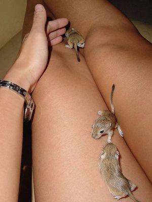 Ratten-kinder beim Spielen