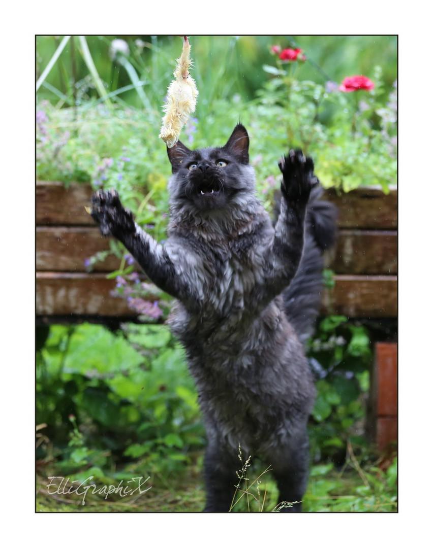Raub-Katze