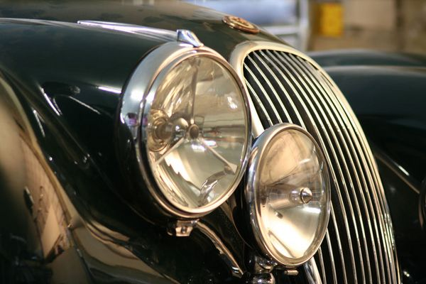 Raubkatze (Jaguar)