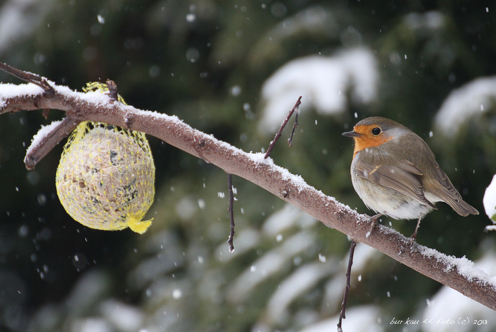 Raubtierfütterung im Winter