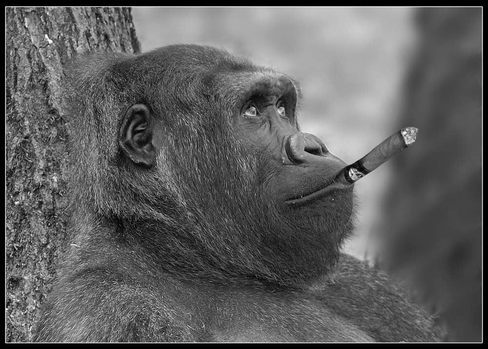 Rauchen macht frei ...