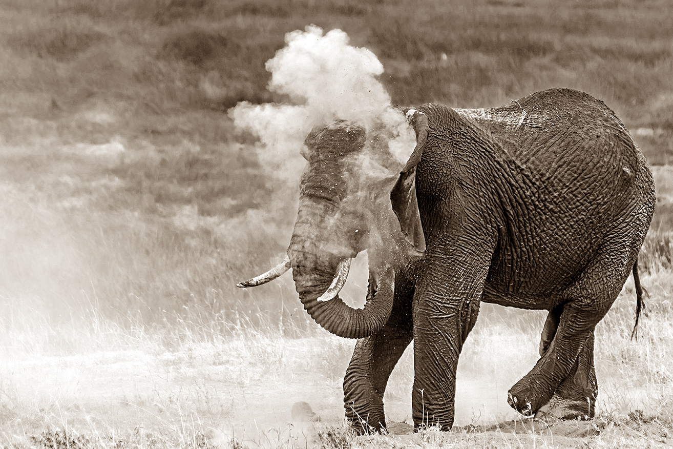Rauchender Elefant?