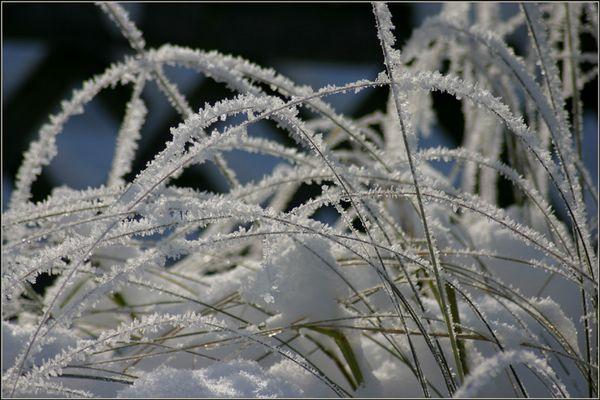 raureif an gräsern