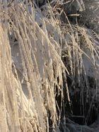 raureif bedeckt das gras