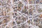 Raureif im Bayerischen Wald