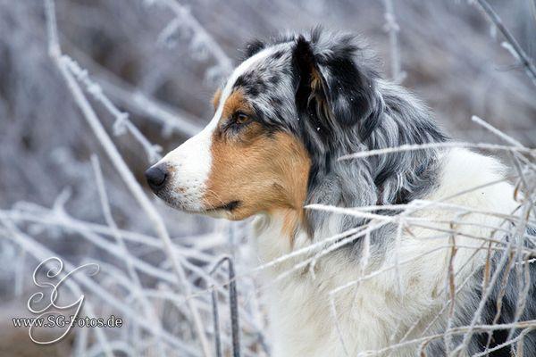 Raureif und Frost - eine silberne Glitzerwelt