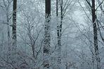 Raureif und Nebel