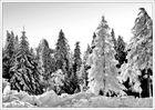 Raureif - Wald u. Sonne
