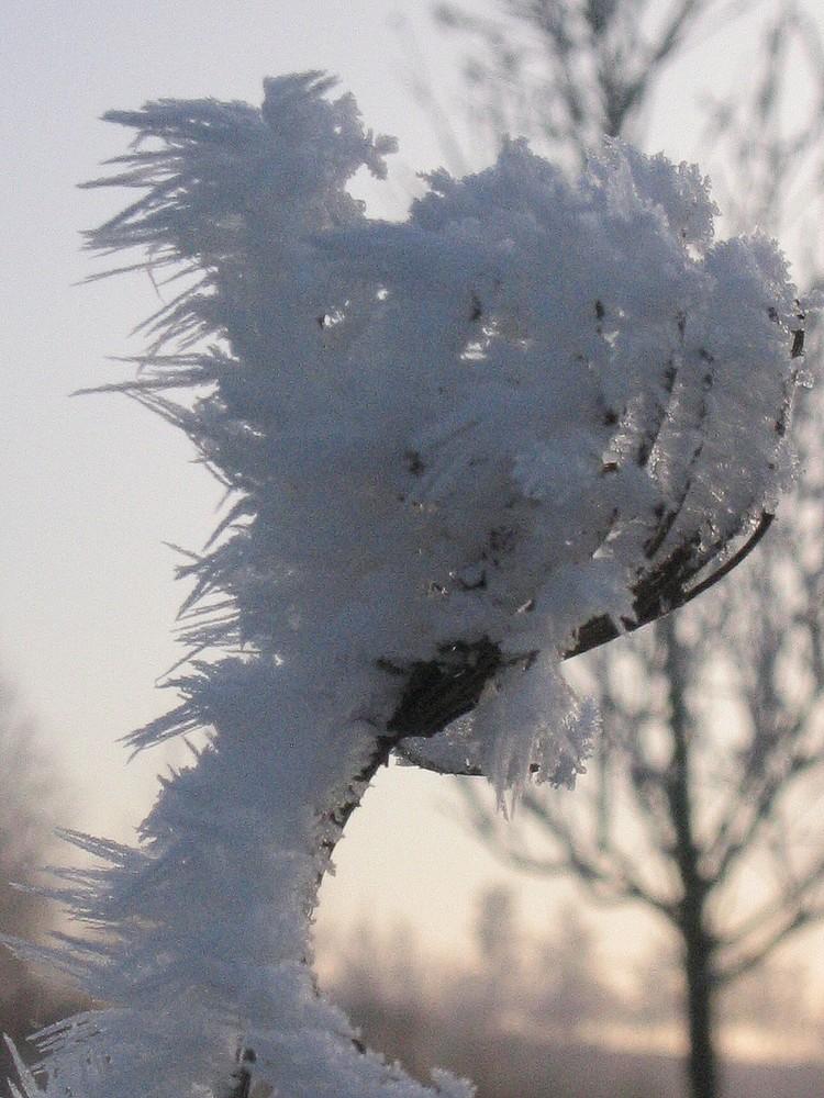 Raureifbildung unter Windeinfluss