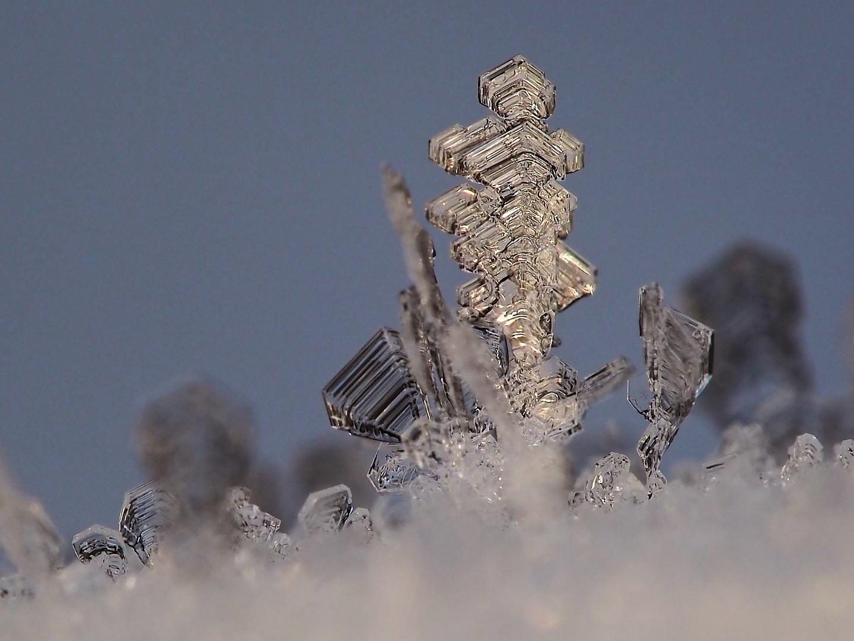 Raureifkristalle - nach einer Nacht mit -14°C - beim ersten Sonnenlicht