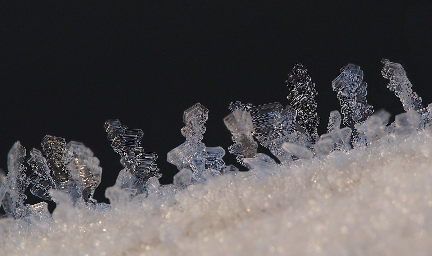 Raureifkristalle - nach einer Nacht mit -14°C - beim ersten Sonnenlicht II