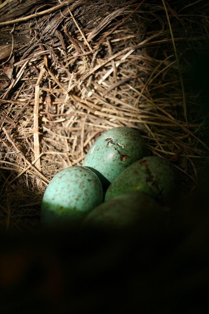 Raus aus dem Ei