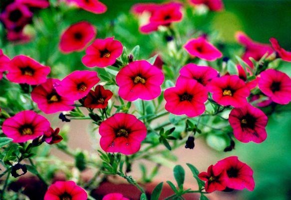 Rausch in Pink