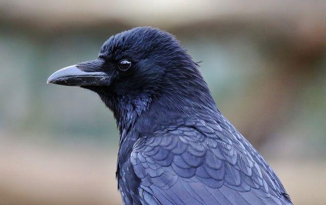 ...Raven...