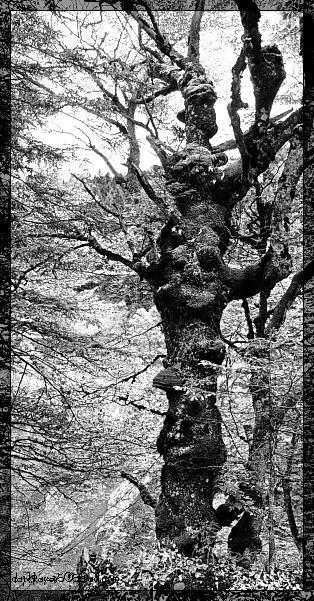 Raven's Tree