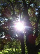Rayitos del sol