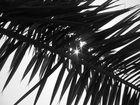 Rayon de lumière à travers une feuille de palmier