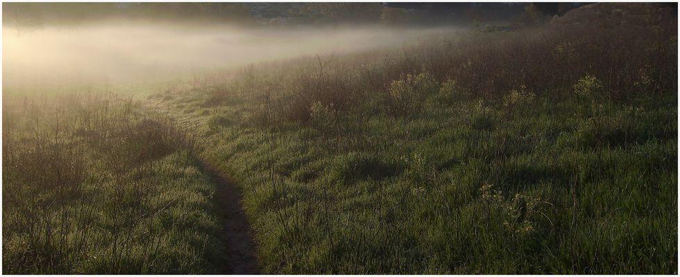 Rayon de lumière dans la brume.