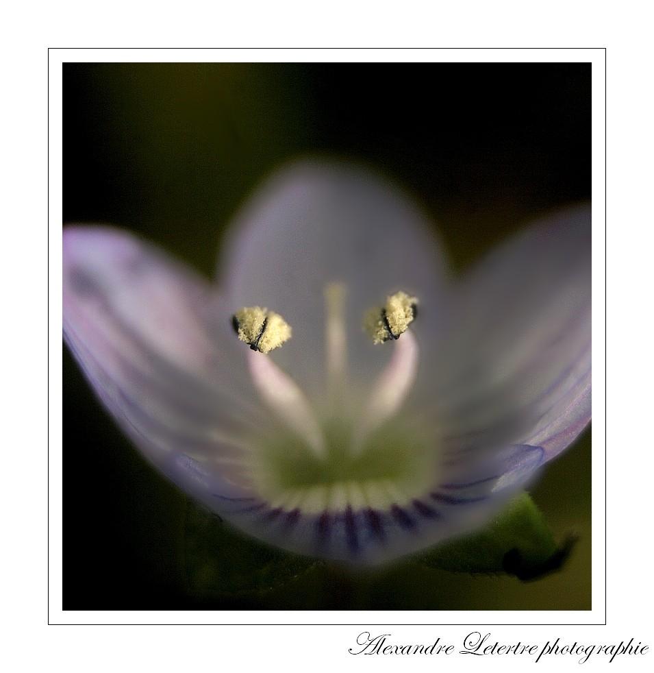 rayon de soleil sur les étamines d'une fleur