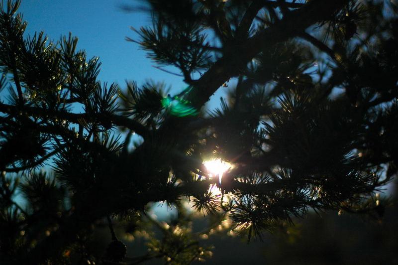 Rayons de soleil à travers un sapin