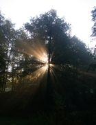 rays...