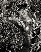 Árbol con Gato