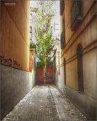 Árbol en calle sin salida, apresado ????