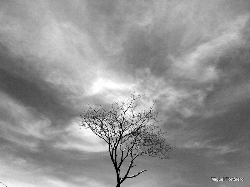 Árbol Enigmático