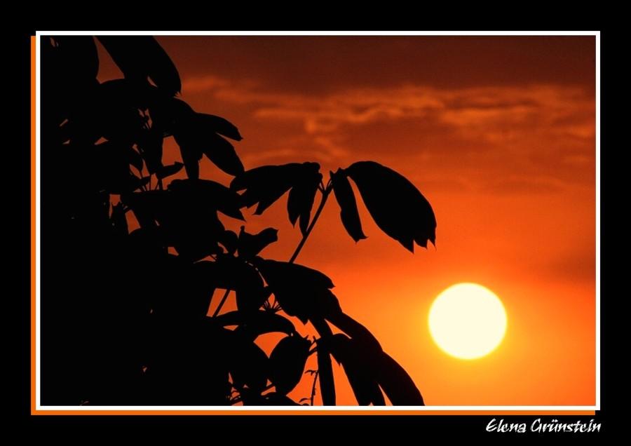 Árbol-sol-atardecer