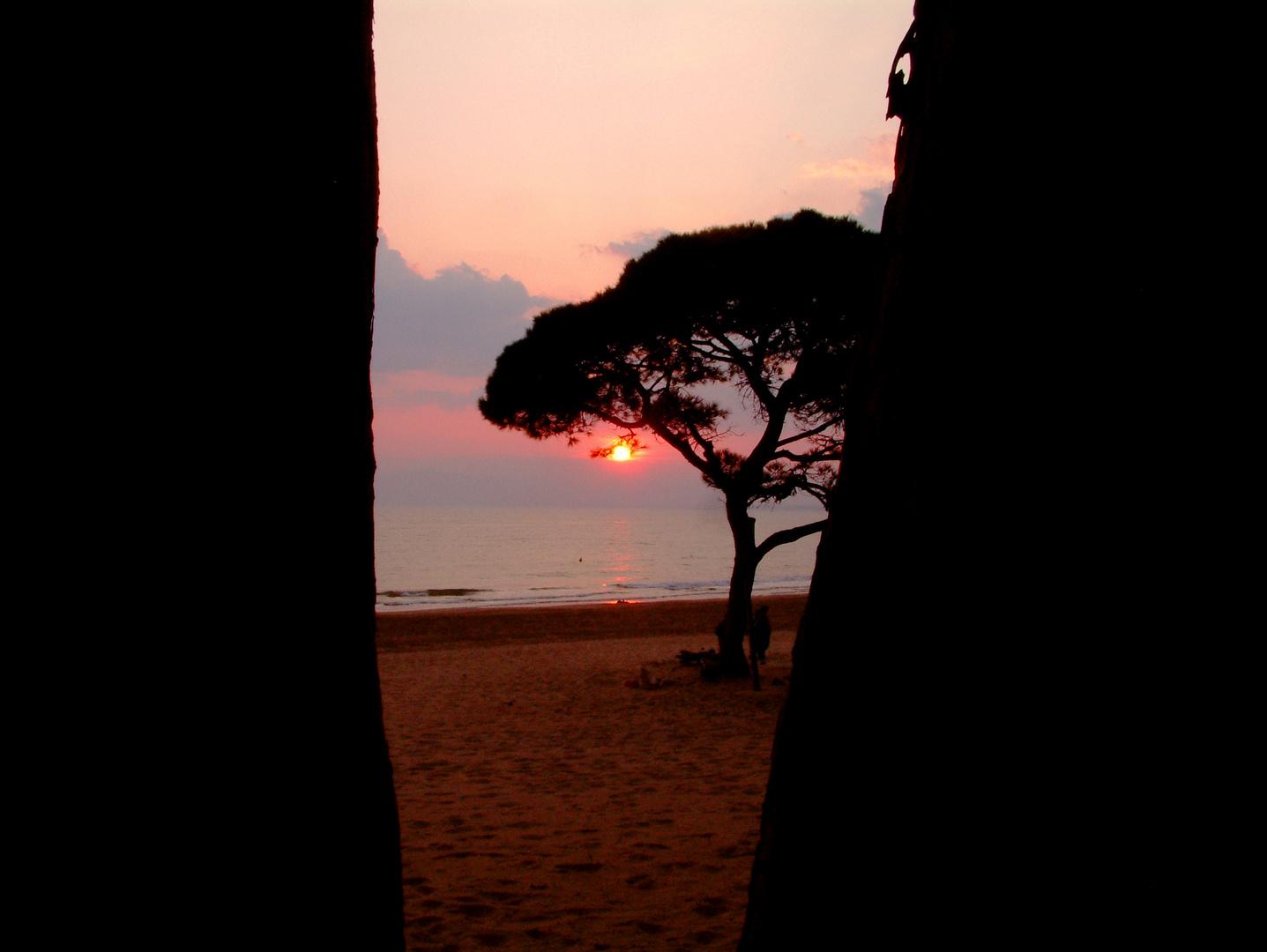 Árboles, arena y mar (Bäume, Sand und Meer)
