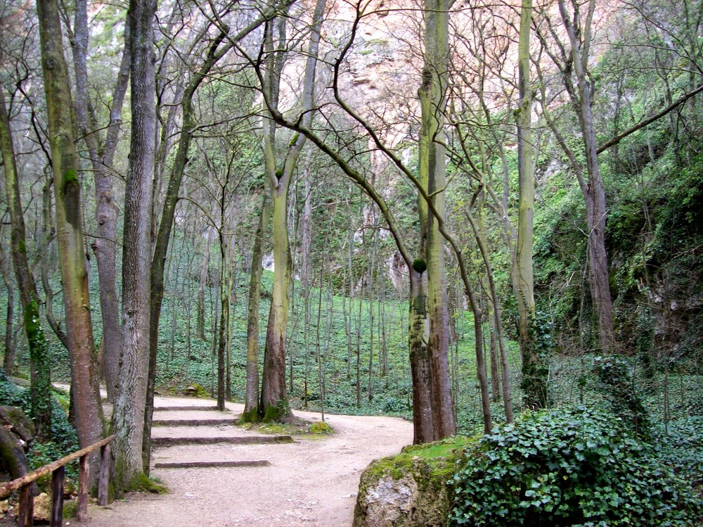 Árboles bajo la lluvia, Monasterio de Piedra