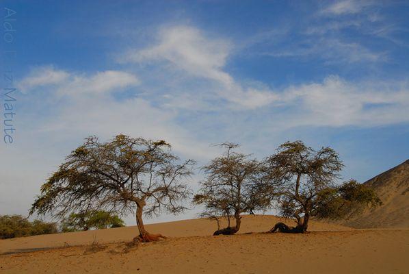 Árboles del desierto